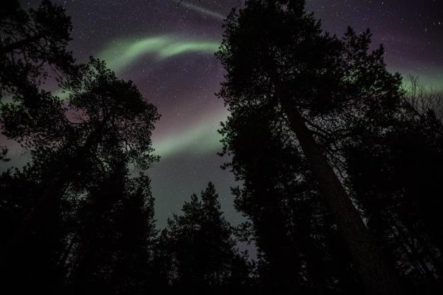 auroras-8053